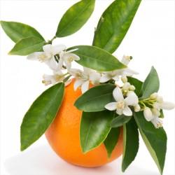 PUKKY Voda z pomerančových květů 100 ml
